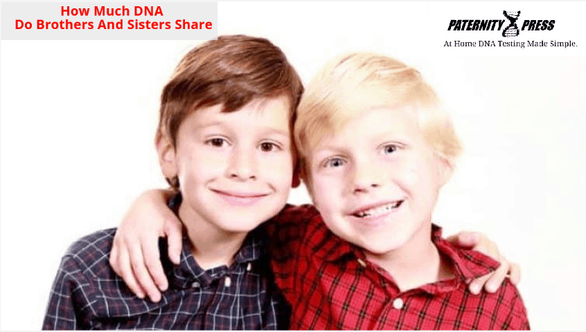 how much dna do siblings share